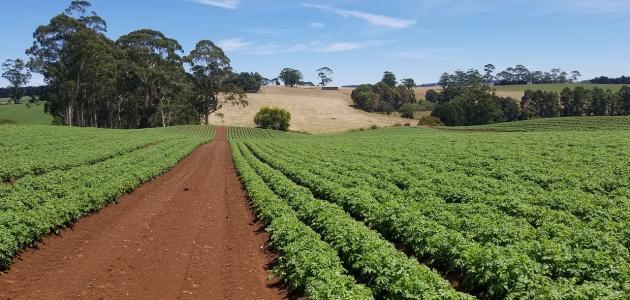 صورة جديد مكونات التربة وأنواعها