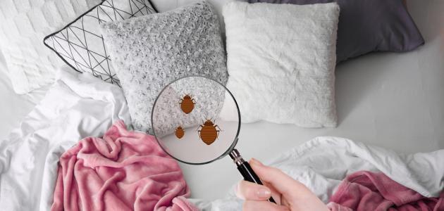 صورة جديد كيفية التخلص من حشرات الفراش