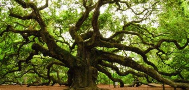 صورة جديد أنواع الأشجار وأسماؤها