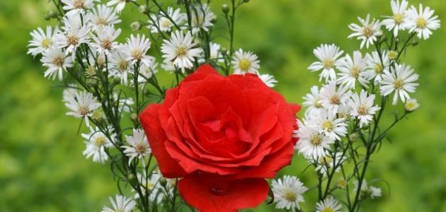 صورة جديد أسماء الورد في اللغة العربية