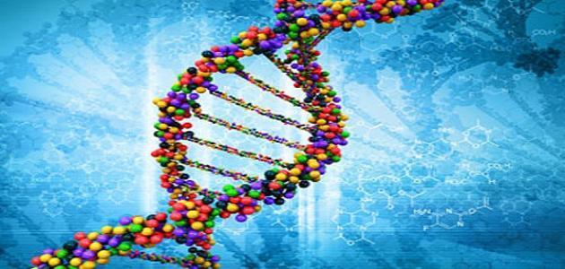 صورة جديد كيفية عمل تحليل DNA