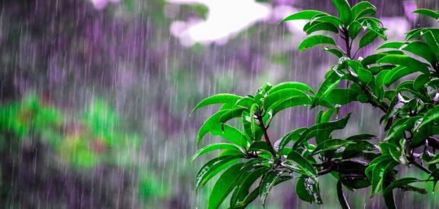 صورة جديد أجمل العبارات عن المطر