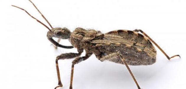 صورة جديد معلومات عن الحشرات