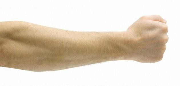 صورة جديد أين يقع الكوع في جسم الإنسان