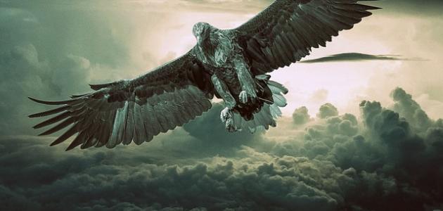صورة جديد ما هو طائر الرخ
