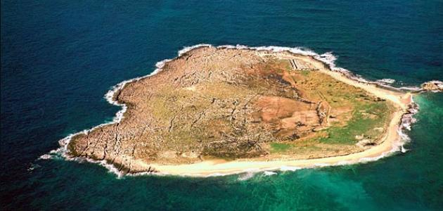 صورة جديد محمية جزر النخيل