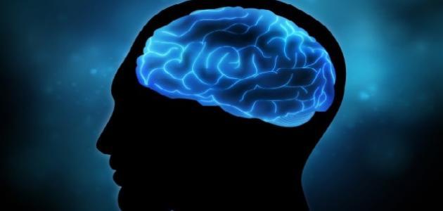 صورة جديد كيف اهتم الإسلام بالعقل والعلم