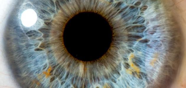 صورة جديد مكونات العين