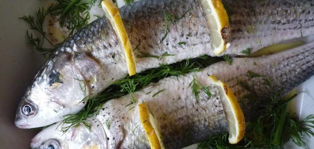 صورة جديد فوائد سمك البوري