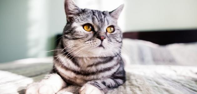 صورة جديد التخلص من رائحة القطط في المنزل