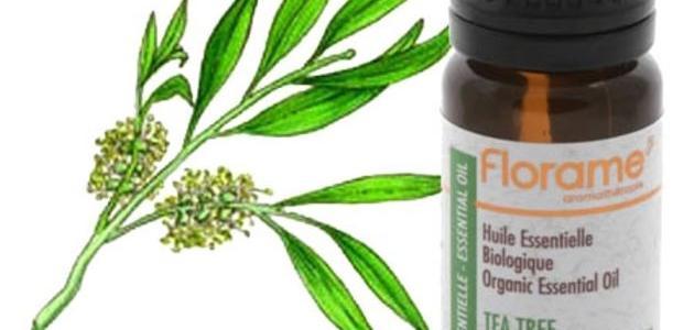 صورة جديد فوائد زيت شجرة الشاي للبشرة الدهنية