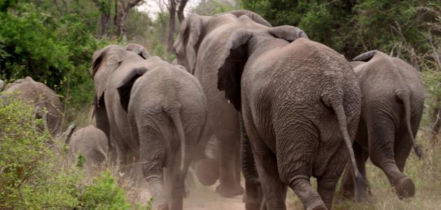 صورة جديد أسباب تناقص أعداد الحيوانات