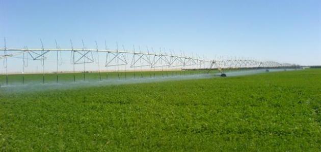 صورة جديد كيف يزرع البرسيم