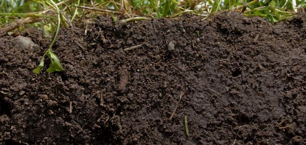 صورة جديد كيف يمكن حماية التربة