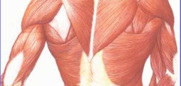 صورة جديد ما هو ضمور العضلات