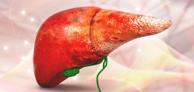 صورة جديد التضخم في الكبد