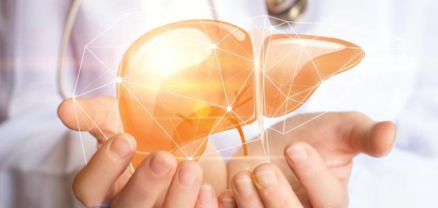 صورة جديد كيف نحافظ على صحة الكبد