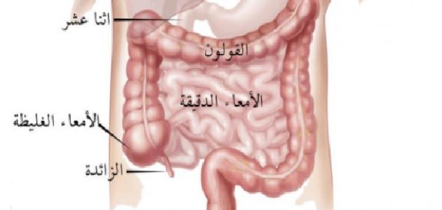 صورة جديد كم طول الأمعاء الدقيقة في جسم الإنسان