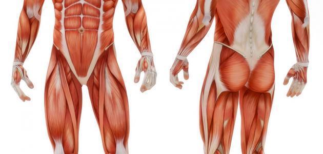 صورة جديد ما هي أجهزة جسم الإنسان