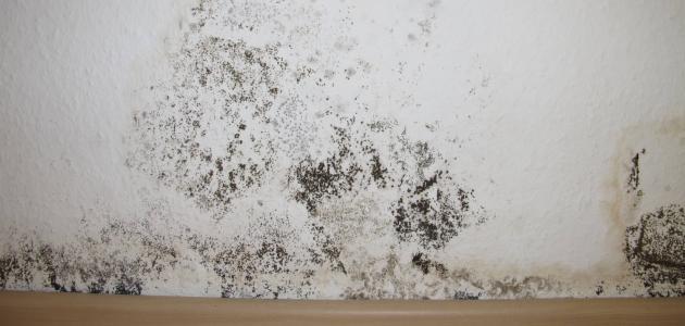 صورة جديد التخلص من العفن والرطوبة