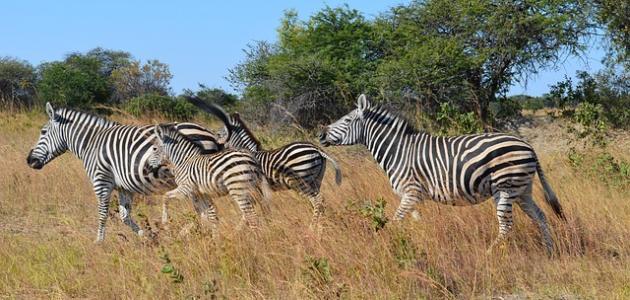 صورة جديد أين تقع زيمبابوي
