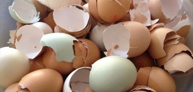 صورة جديد ما فوائد قشر البيض