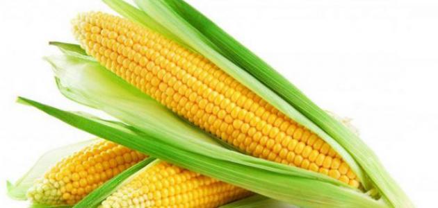 صورة جديد فوائد الذرة للرجيم