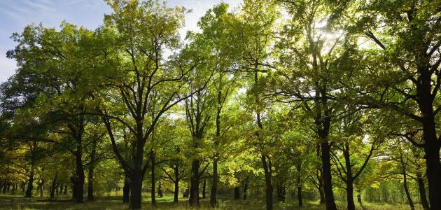 صورة جديد ما أهمية زراعة الأشجار للنظام البيئي