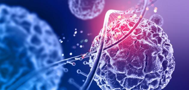 صورة جديد مكونات نواة الخلية