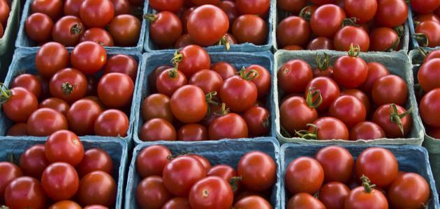 صورة جديد كيفية حفظ الطماطم لمدة طويلة