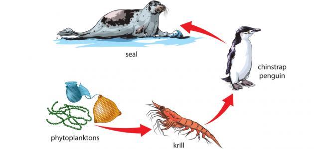 صورة جديد تعريف السلسلة الغذائية