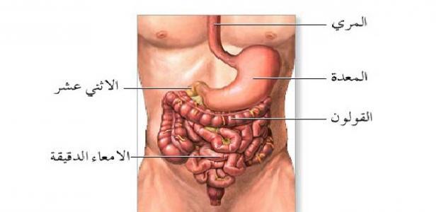 صورة جديد أين تقع المعدة في جسم الإنسان