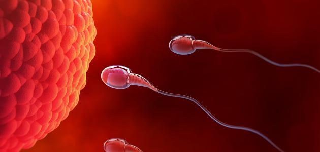 صورة جديد متى يحدث الحمل