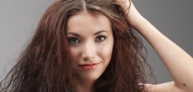 صورة جديد طرق تغذية الشعر الجاف
