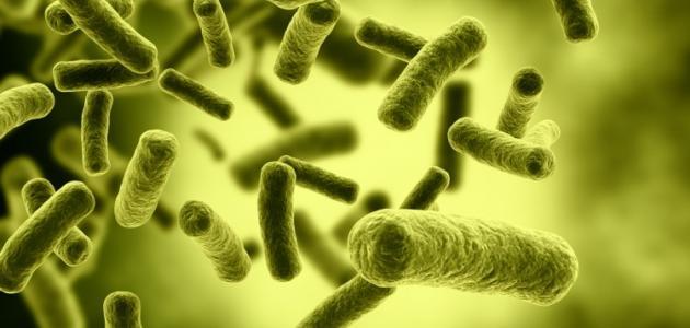 صورة جديد ما أهمية دور البكتيريا النافعة