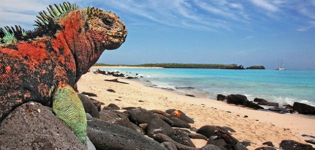 صورة جديد معلومات عن جزيرة غالاباغوس