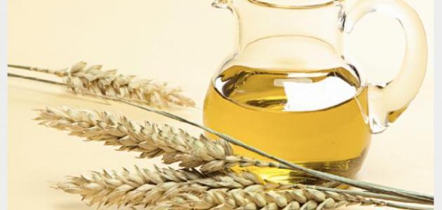 صورة جديد كيفية استخدام جنين القمح