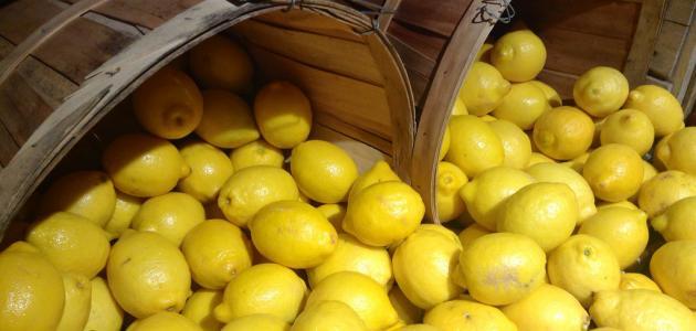 صورة جديد طريقة حفظ الليمون