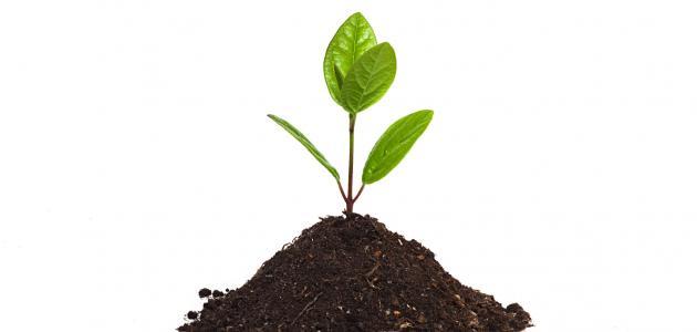 صورة جديد مراحل نمو النبات