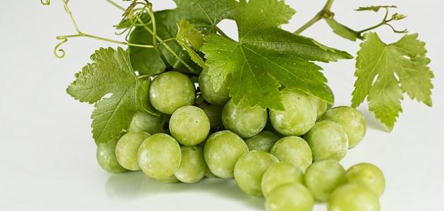 صورة جديد ما هي فوائد العنب