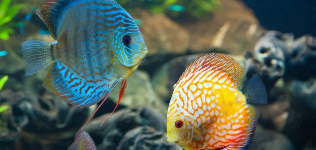 صورة جديد كيف تتنفس الأسماك تحت الماء