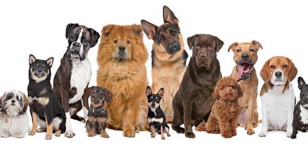 صورة جديد معلومات عن أنواع الكلاب