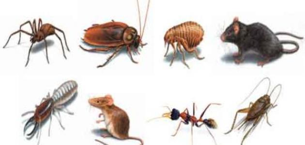 صورة جديد أنواع الحشرات وأسماؤها