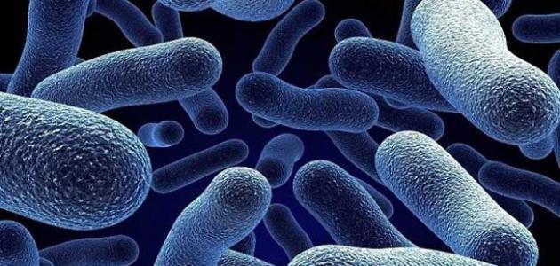 صورة جديد فوائد وأضرار البكتيريا