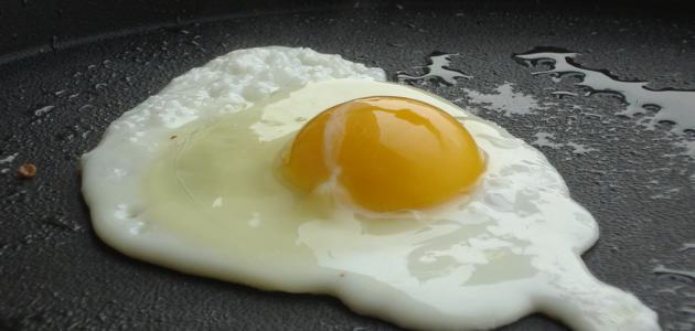 صورة جديد فوائد البيض المقلي