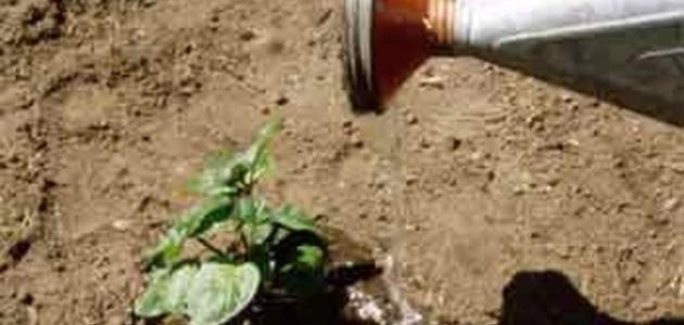 صورة جديد كيف أزرع النعناع