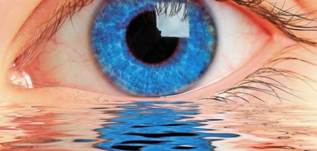 صورة جديد كيف يرى الإنسان