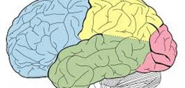 صورة جديد 10 نصائح للحفاظ علي سلامه المخ