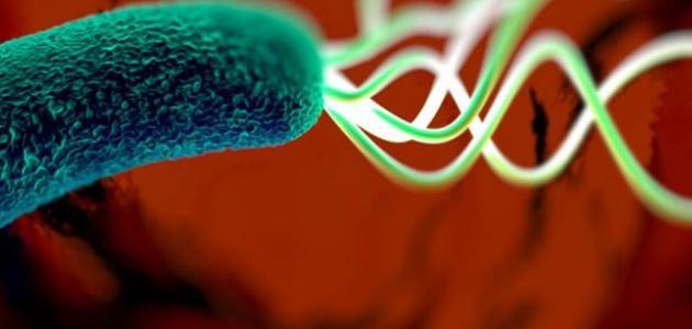 صورة جديد كيفية علاج جرثومة المعدة بالأغذية الطبيعية