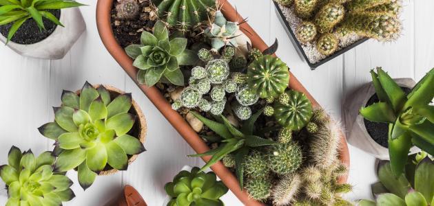 صورة جديد كيفية زراعة نباتات الزينة